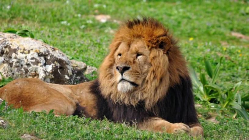 Escursioni allo Zoo Safari di Fasano Puglia