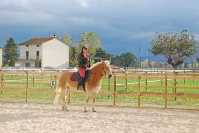 24 cavalli a vostra disposizione per le lezioni