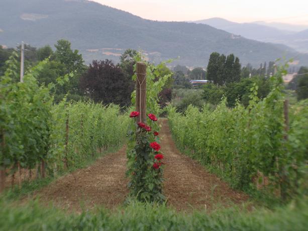 Agriturismo con Vigneti e Cantina Umbertide Umbria