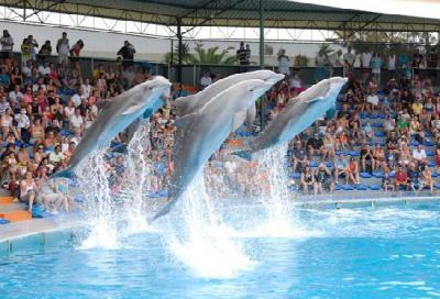 Spettacolo delfini Zoomarine