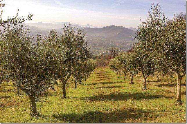 Casale Agrituristico casa-vacanze campagna umbria Magione-Lago-Trasimeno