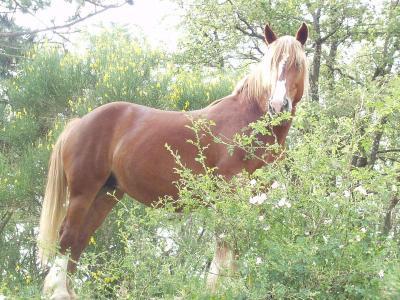 I cavalli della fattoria didattica