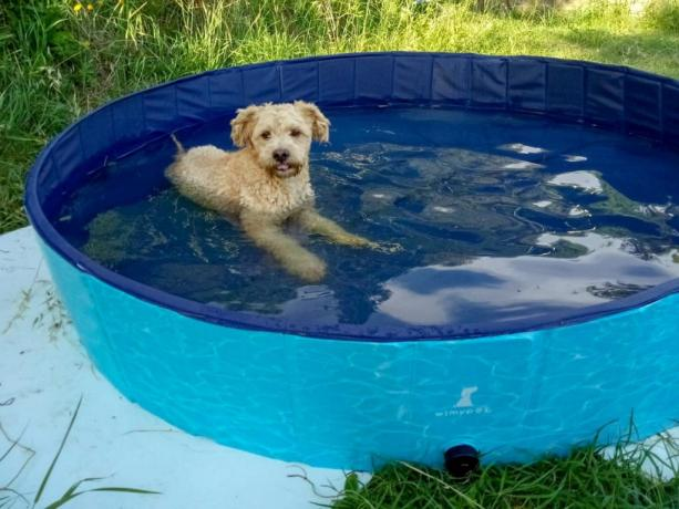 Agriturismo PetFriendly piscina per cani in Toscana