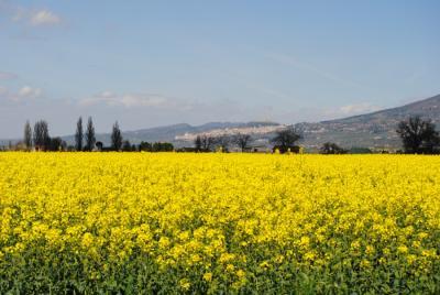 Agriturismo con vista su Assisi