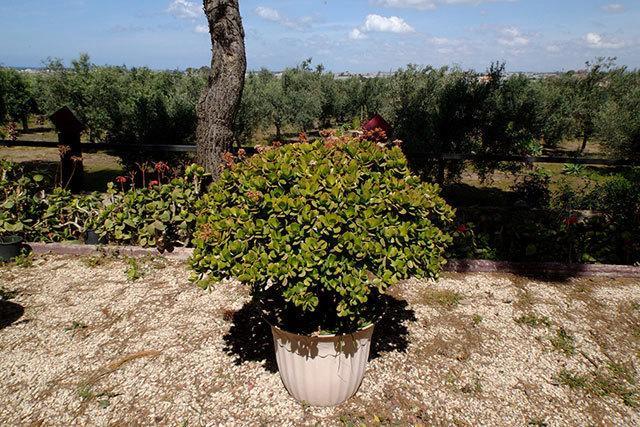 Parco con 300 alberi di ulivo