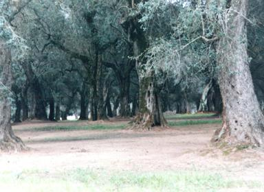 Hotels with Wellness-center near the Olive Plantations