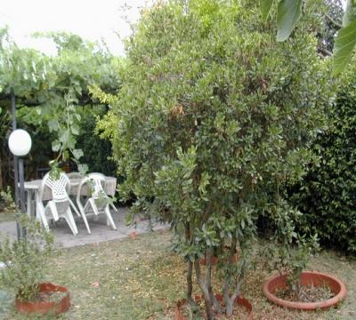 Cured garden