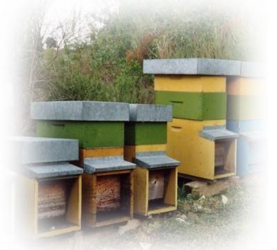 Produzione e vendita di miele