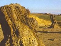 La foresta fossile di Avigliano Umbro