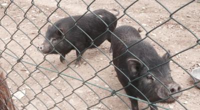 Agriturismo con animali da cortile a Gualdo Cattaneo