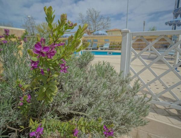 Piscina relax al Conero -residence con piscina