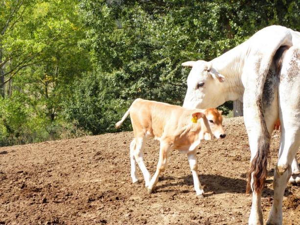 Animali Fattoria Didattica Agriturismo a Gubbio in Umbria