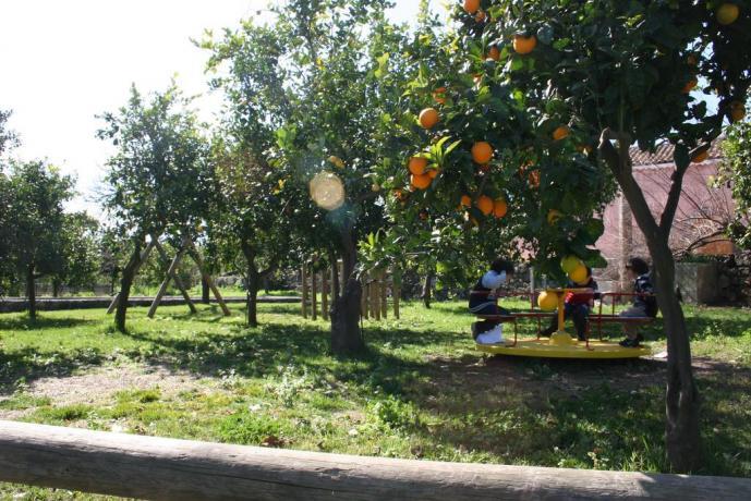 Agriturismo in Sicilia immerso in una limonaia