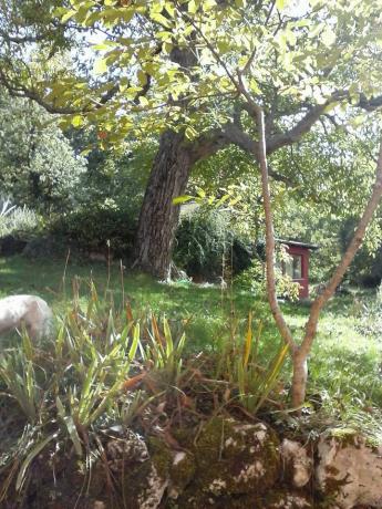 il noce in giardino