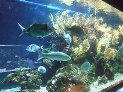Aquarium of Porto Santo Stefano