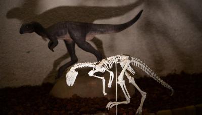 Dinosauri a Gubbio gite