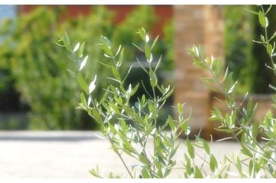 Giardino curato e ideale per relax