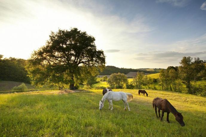 SPA a Fabro immersa nel verde della natura
