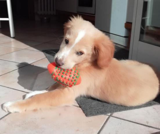 Animali ammessi in Hotel a Fano