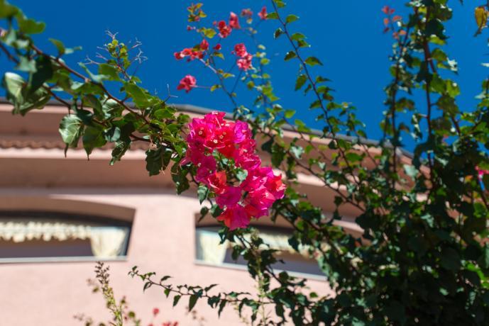 Fioritura nel giardino del Resort