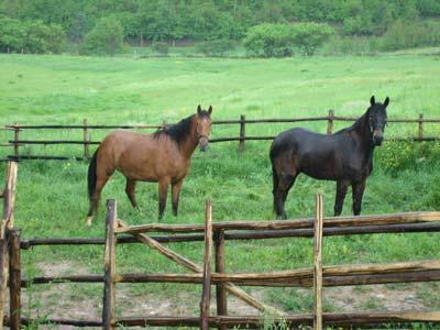 Allevamento cavalli a Montefalco, Umbria