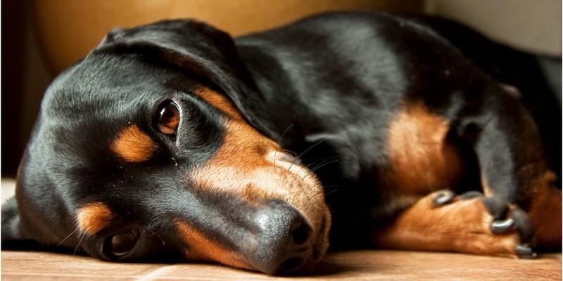 Hotel in Umbria ammessi cani piccola taglia