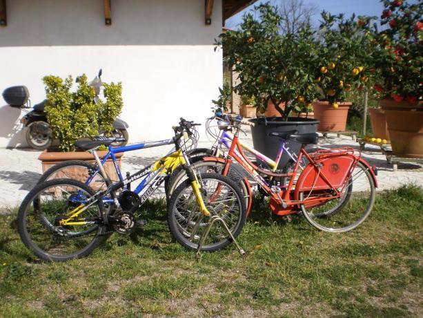 Noleggio bici gratis casa vacanze a Vasanello