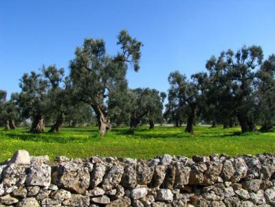 Trulli con ampio spazio verde, Valle D'Itria