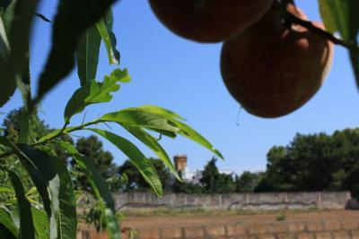 Azienda Agricola a circa 12 dal mare