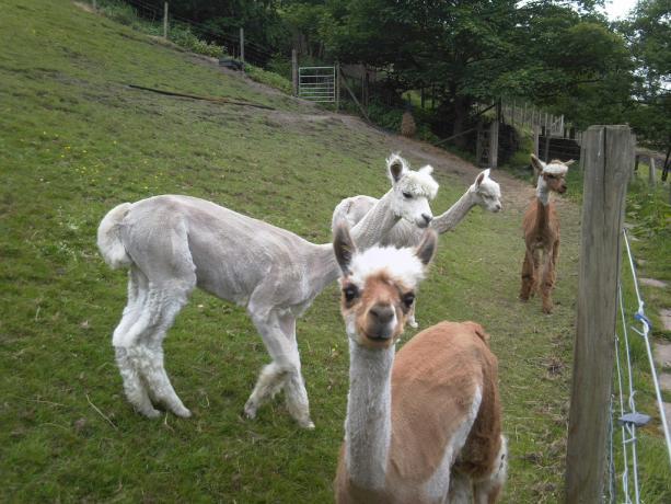 Relais Perugia visita allevamento animali