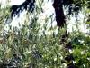 Agriturismo immerso nel verde