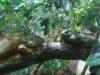 Acquario: iguane e altri rettili
