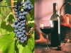 cantine aperte umbria degustazione di vino