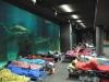 Dormire tra squali all'Acquario di Genova
