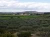 Coltivazione mandorleti e vendita olio, Sicilia