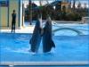 Zoomarine: Giochi d'acqua nelle piscine