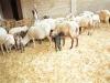 La nostra fattoria e i nostri animali