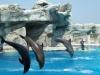 Alberghi: Acquafan e delfinario a Riccione