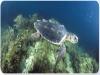 Tartarughe in acquario ad Oltremare