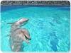 Delfini: attrazione di Oltremare