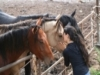 Allevamento cavalli