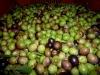 Olive umbre