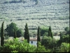 Panorama Uliveti tra Trevi e Spoleto