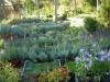 vivaio biologico piante aromatiche umbria