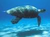 Turtles in lampedusa