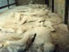 Pompeii excavations plaster casts