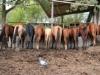 Cavalli nell'agriturismo