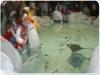 Acquari con specie marine varie
