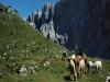 Vacanze nella natura in Trentino