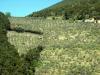 casale immerso negli ulivi in Umbria